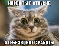 udivlennyy-kot_117796279_orig_